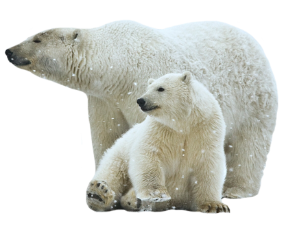 Air Conditioning Polar Bear and baby Polar Bear