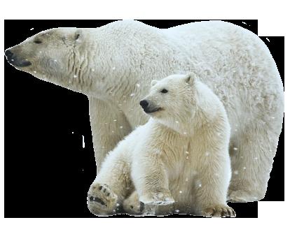 Air Conditioning Polar Bear and baby Polar Bear